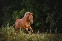 tierfotografie-37