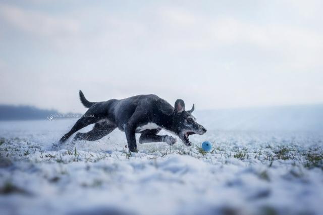 Hundefoto im Schnee