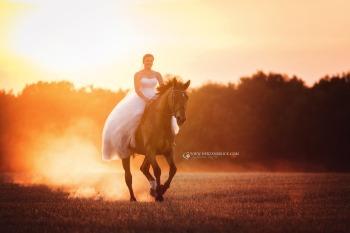 Pferdefotografie 11