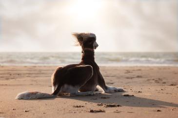 Hundefoto-Strand
