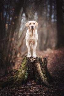 Labrador Wald