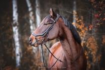 pferdefoto herbst